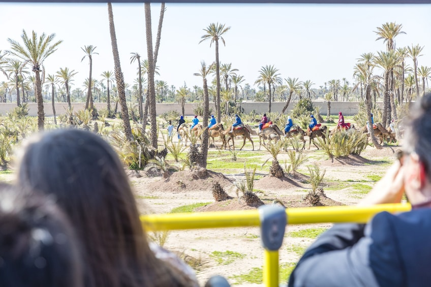View of the Marrakech Hop On-Hop Off City bus tour and Camel Ride in palm grove
