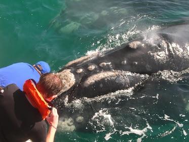Whale Watching & Hermanus Wine Tour