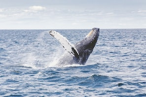 Whale Watching & Hermanus Wine Tour