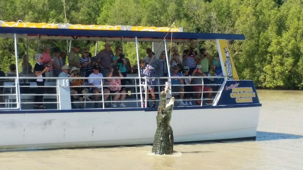 Boat tour feeding a hungry crocodile meat on a stick on a river in Australia