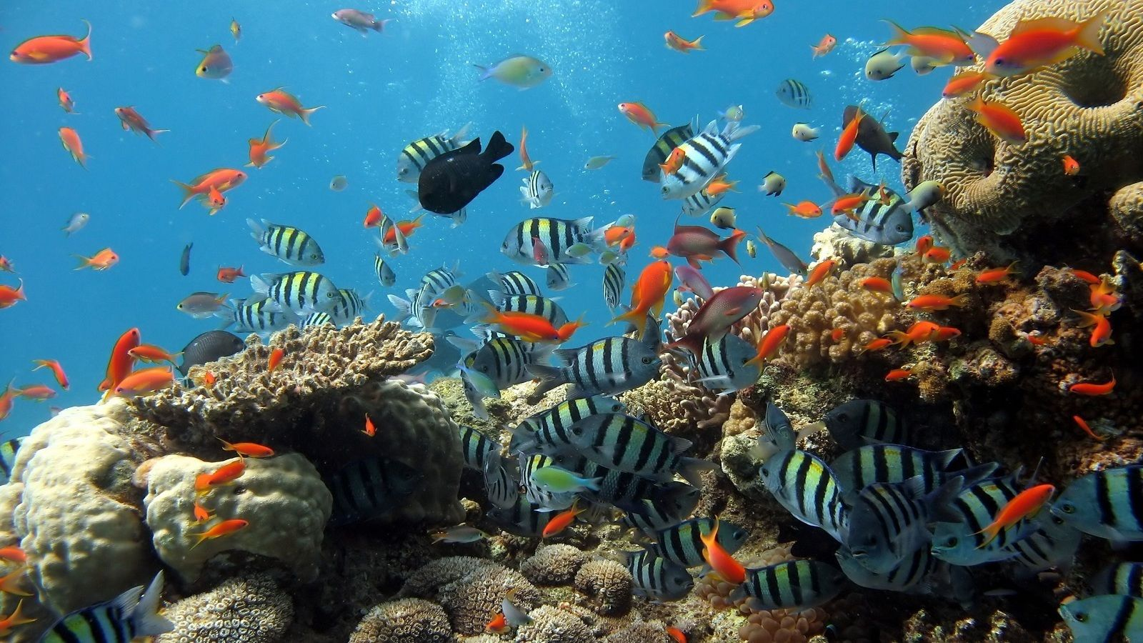 Beautiful coral reefs and tropical fish on Cham Island