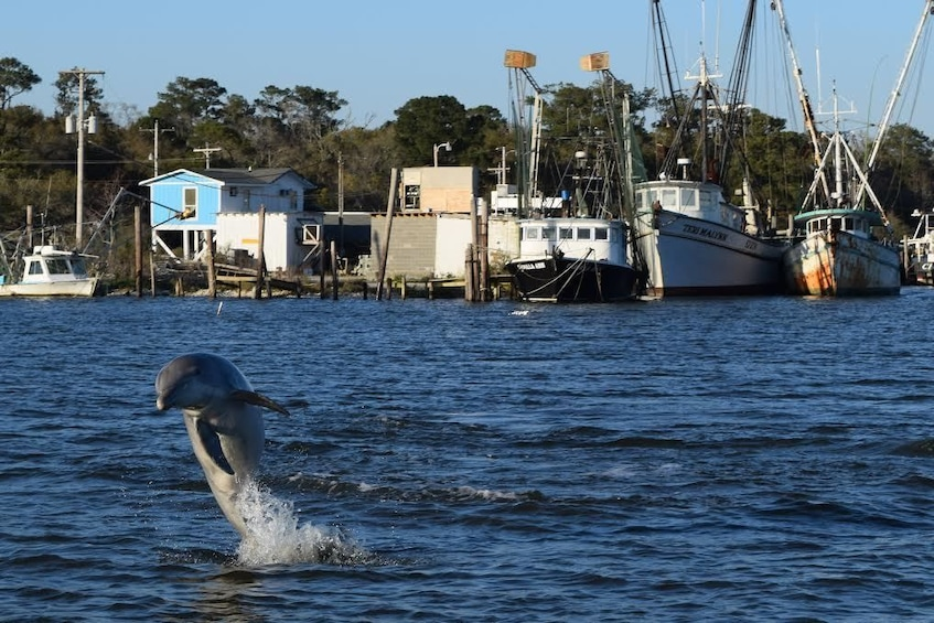 Show item 1 of 1. Porpoise jumping out of water