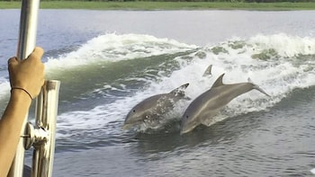 Tybee Island Dolphin Tour