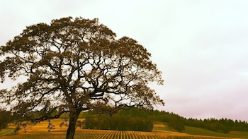 Private Group, Full Day - Willamette Valley Wine Tour