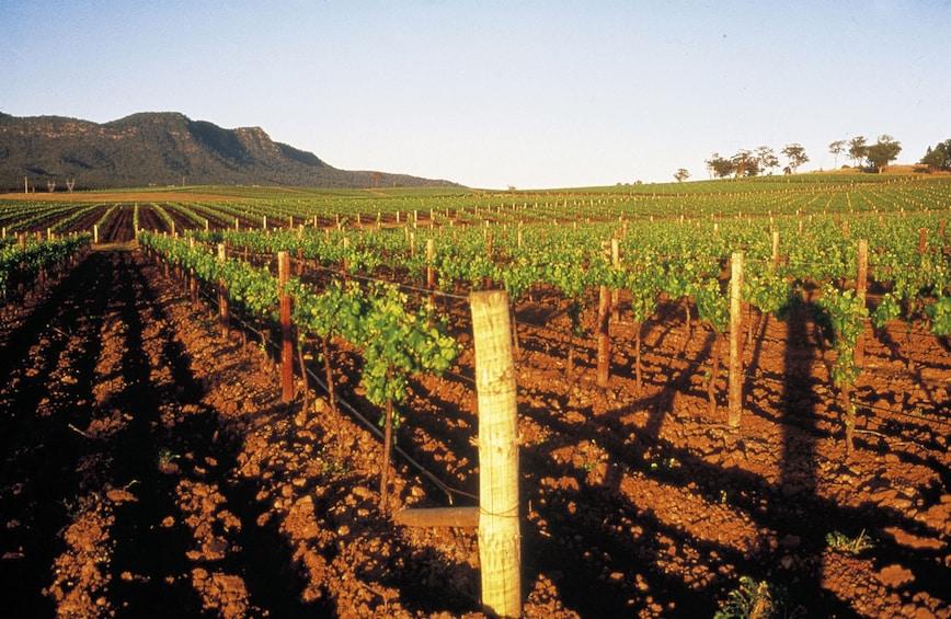 Show item 8 of 8. Hunter Valley vineyard in Australia