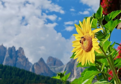 Mountains-Sky-Alps-Sunflower-Clouds-Dolomites-485652.jpeg
