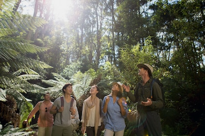 Hiking group in a the jungle in Australia
