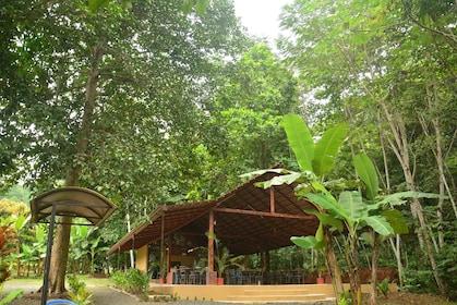 Trees and shaded resting area in Herradura