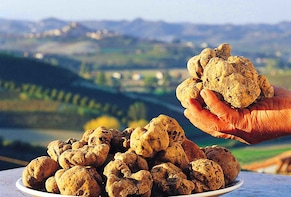 Alba: Half-Day Truffle Hunting and Tasting Tour in Piedmont
