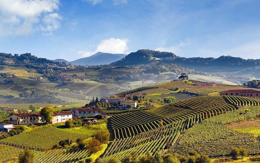 Show item 8 of 8. Piedmont Region vineyards