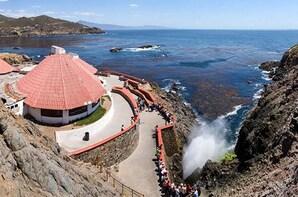 Full-Day Puerto Vallarta Experience