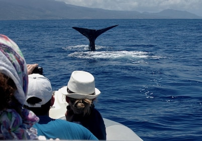 Whale watching group in Guadeloupe