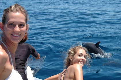 Dolphin watching group in Guadeloupe