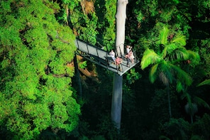 Tamborine Rainforest Skywalk Self Guided Eco Adventure
