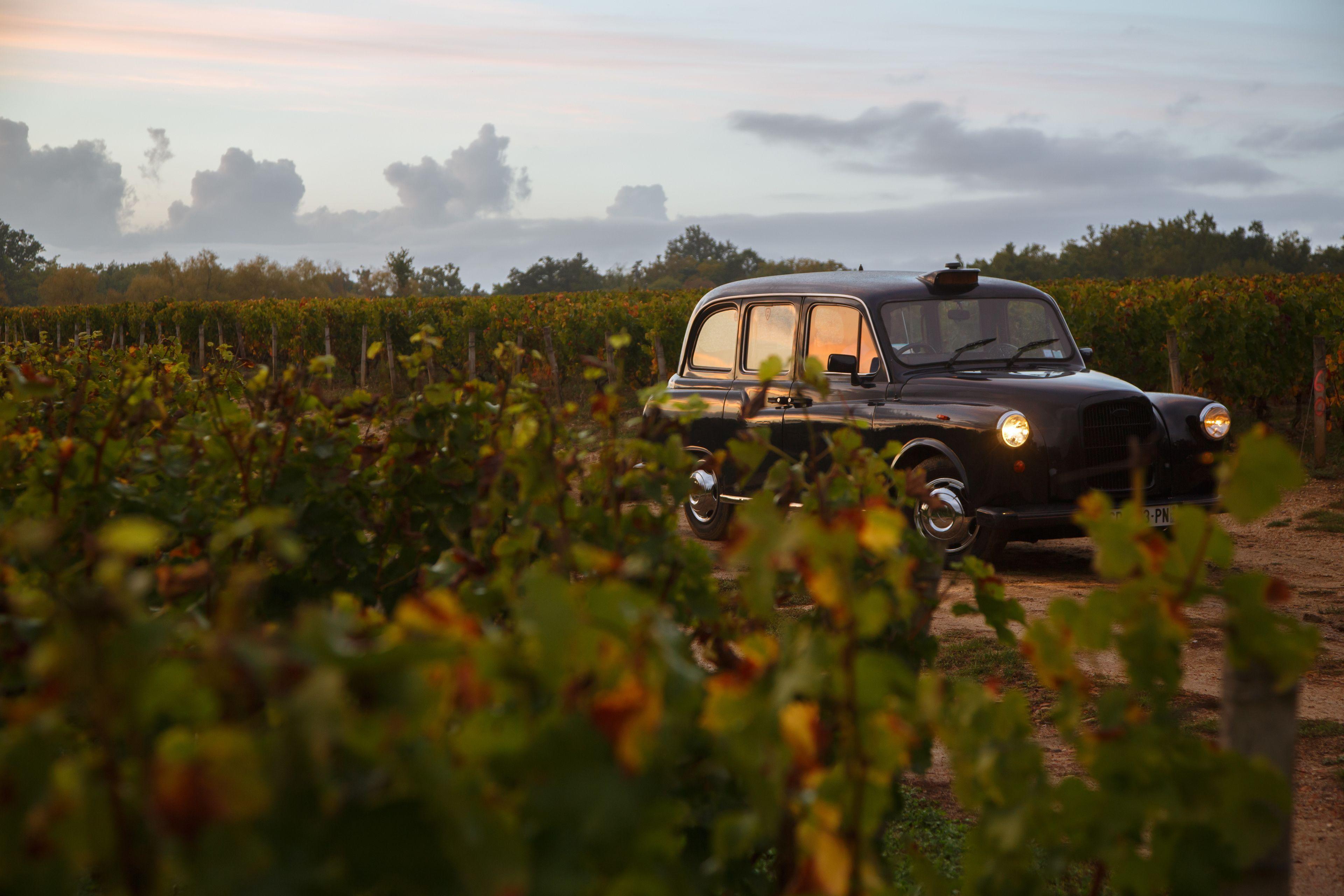 Antique car in a vineyard