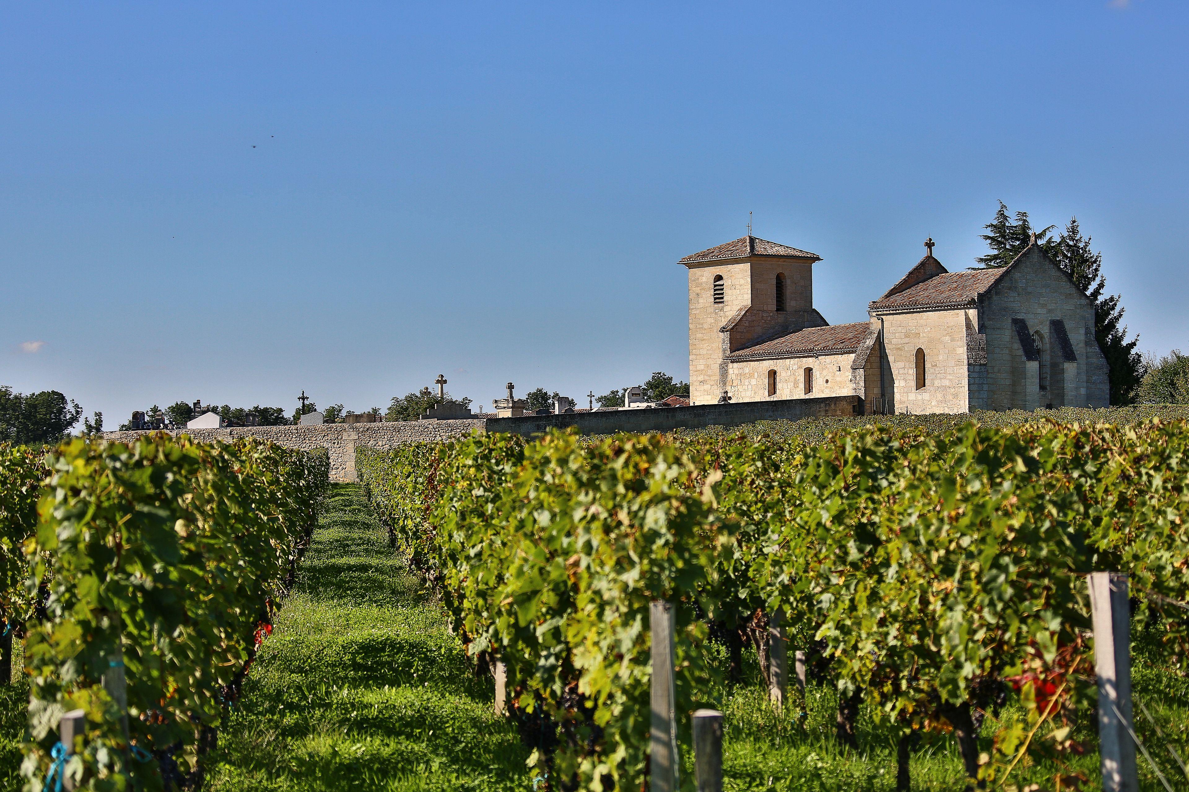 Vineyard at Saint Emilion