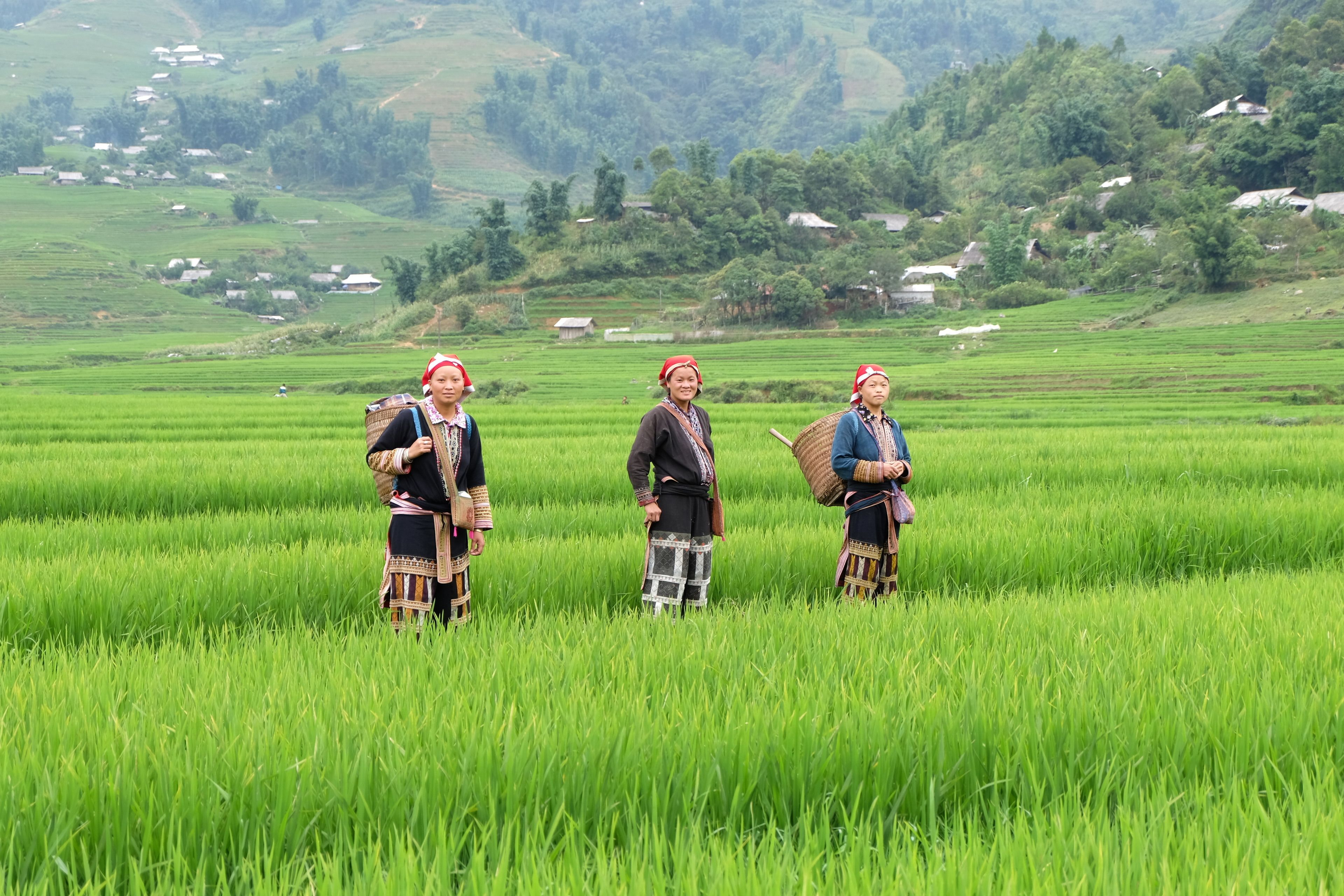 Half-Day Sapa Rice Fields Walking Tour
