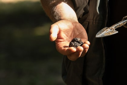 Half-Day Truffle Hunting in the Siena Countryside