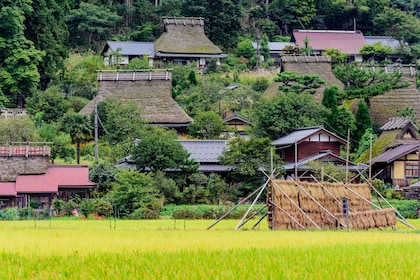 Green grass and homes in Amanohashidate