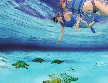 Snorkeling couple looking at large starfish in Cozumel