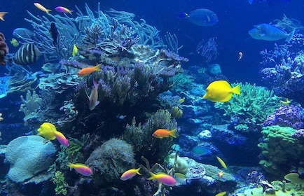 Coral reef and colorful fish in Cozumel