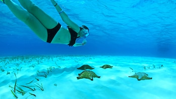 Cozumel Reef Adventure with Snorkeling & Lunch