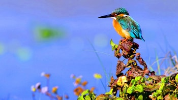All-Inclusive Bird Watching & Cycling Expedition - Kitulgala