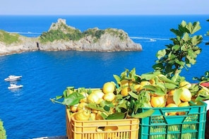 Sorrento: Traditional Lemon Nursery 2-Hour Tour