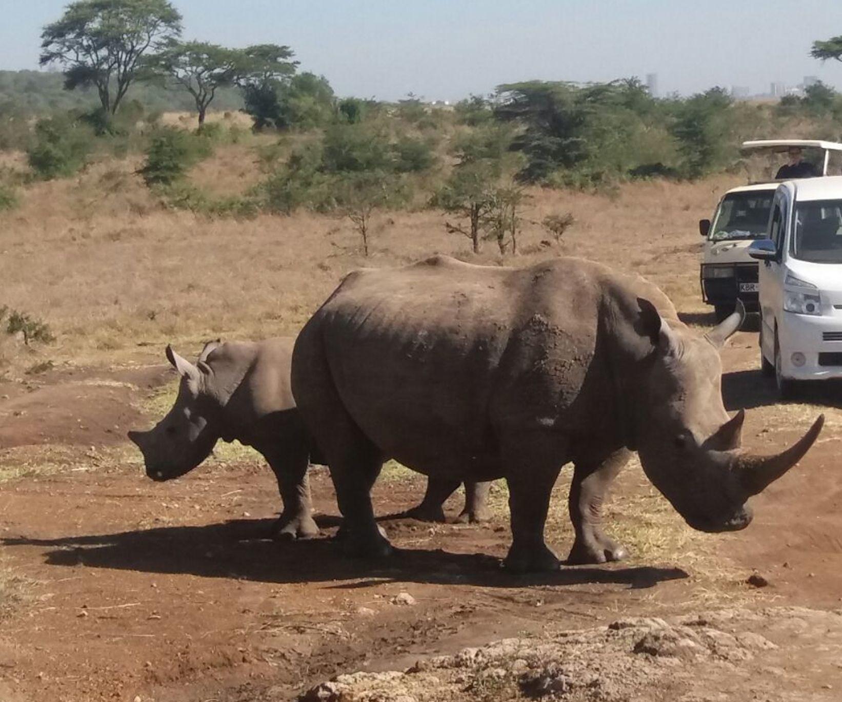 Rhino seen on the Full Day Nairobi National Park tour
