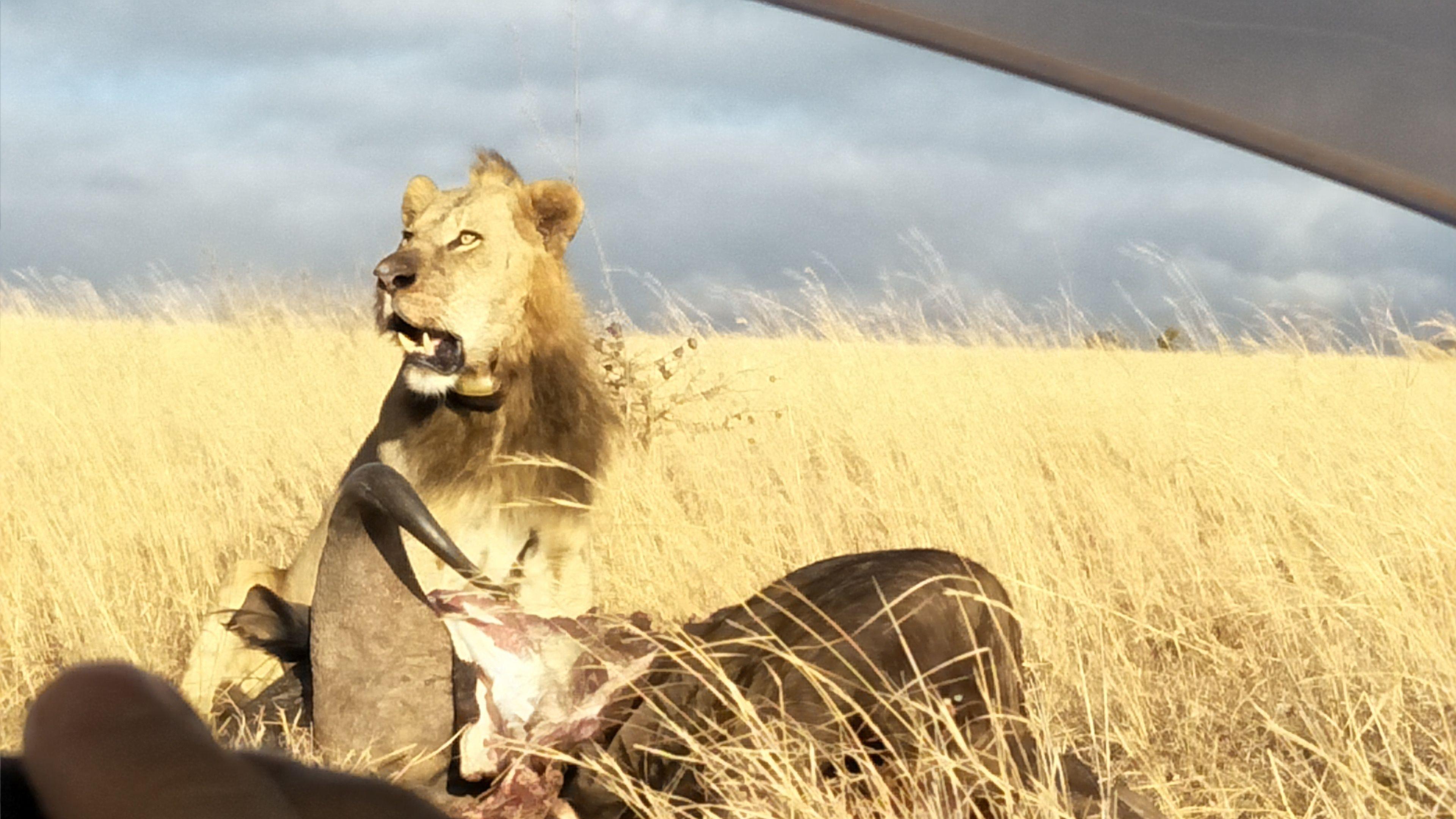 Stunning views of wildlife on the Nairobi National Park tour