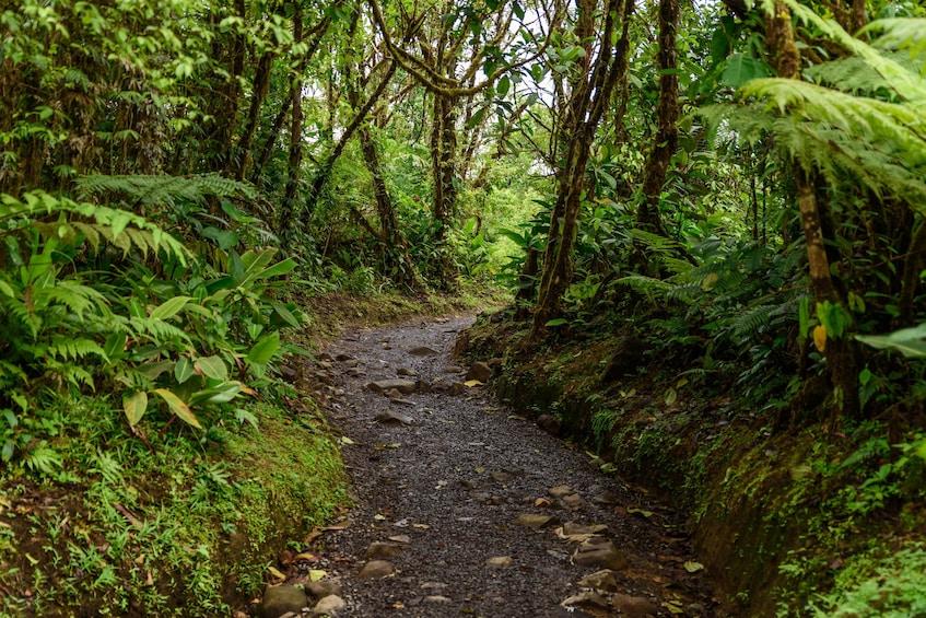 Show item 3 of 10. Rio Celeste Hiking, Sloth & Llanos de Cortez Waterfall Tour