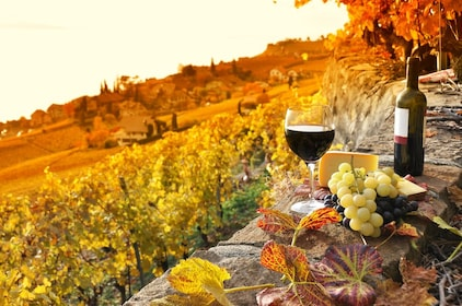 Assisi: Umbrian Hills Wine Tasting Tour with Lunch