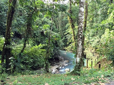 Forest and river in Costa Rica