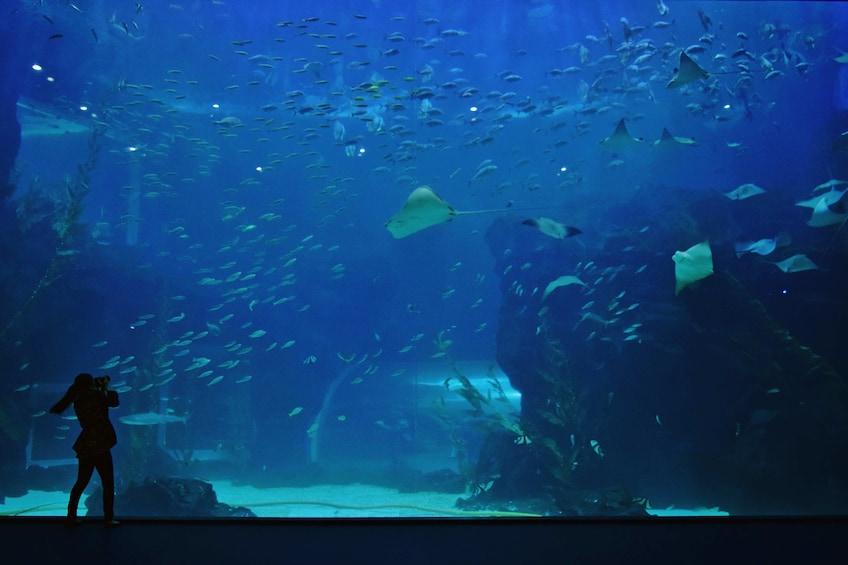 正在顯示第 5 張相片,共 10 張。 Large aquarium in South Korea