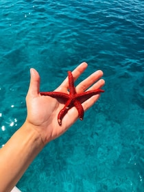 Passenger holding a starfish above water in Split