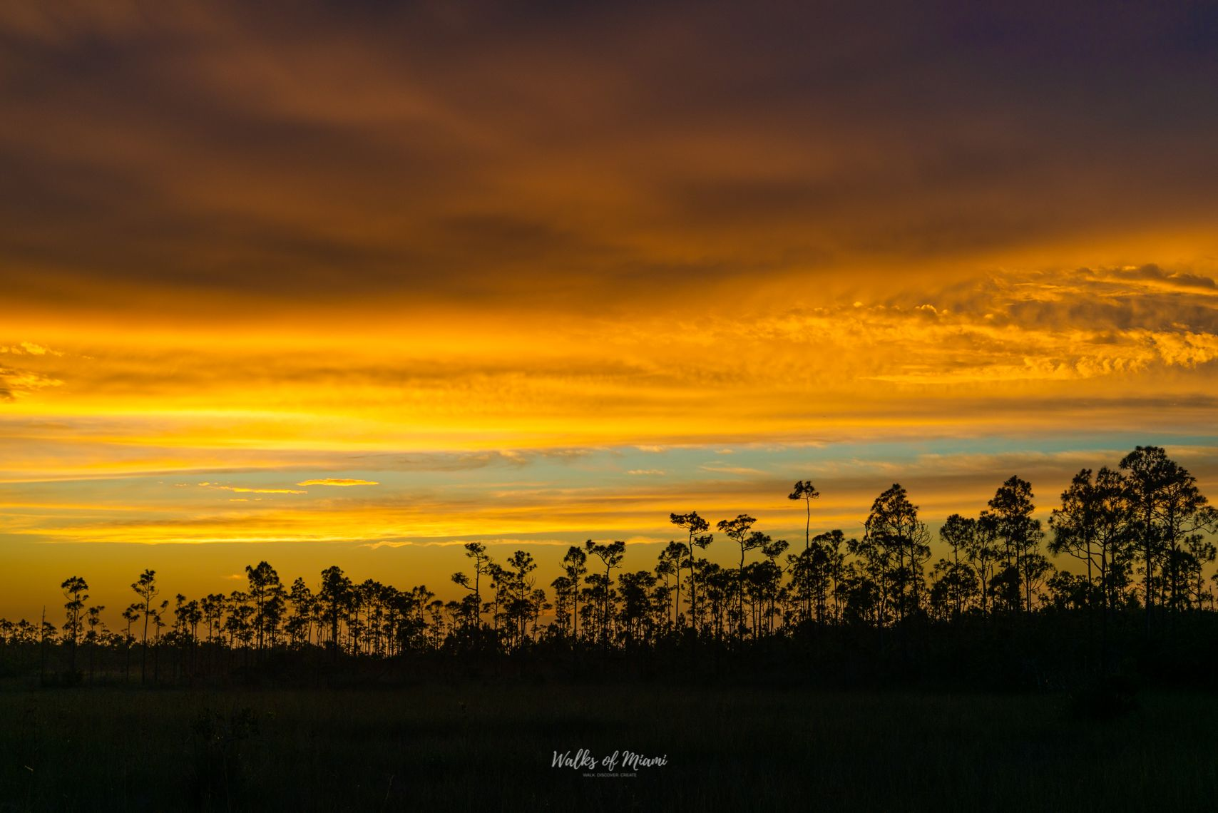 Trees at sunset in Everglades National Park