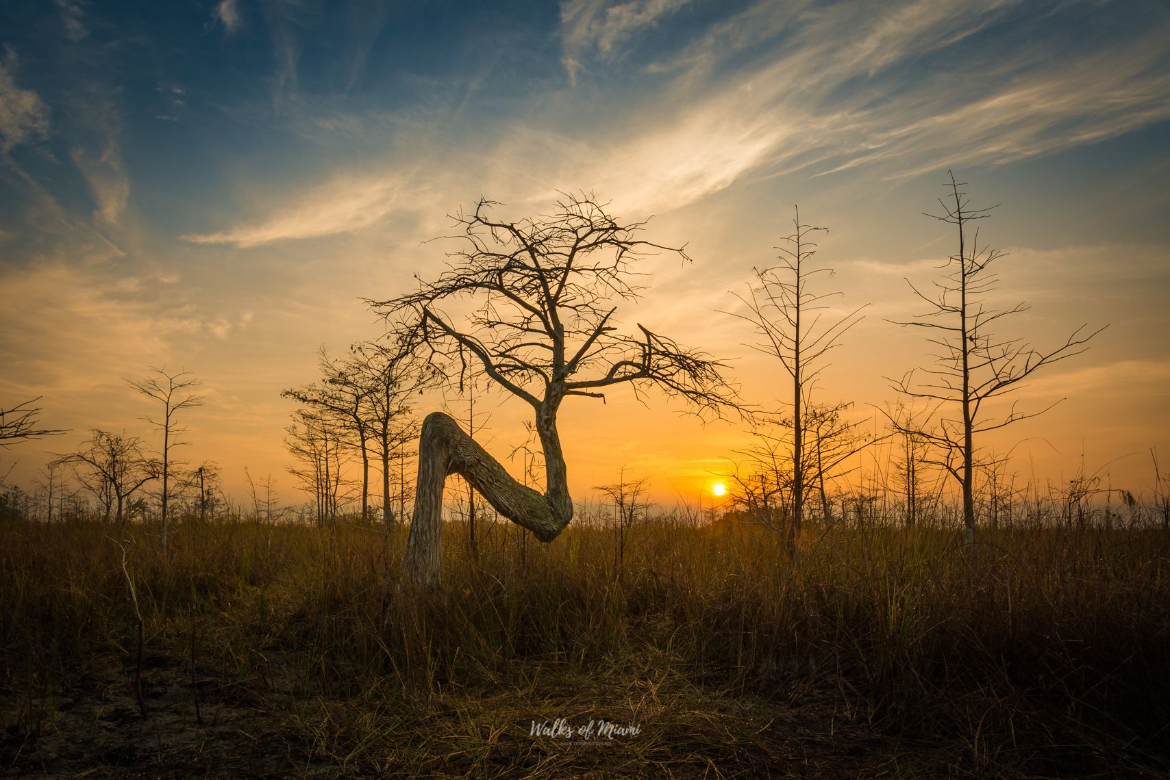 silhouette of the trees at sunset in Everglades National Park