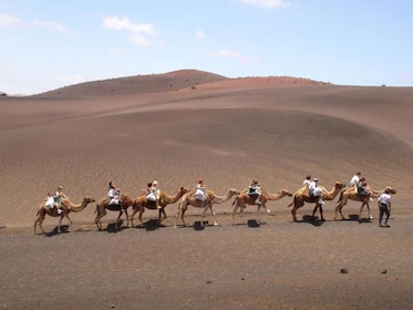 Group on a Camel ride safari in Timanfaya