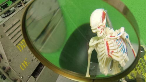 Skeleton under a magnifying glass at the escape room in Escondido