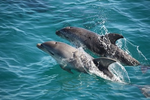 3 Hour Seal and Dolphin Sightsee Cruise