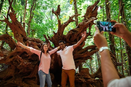 Tourist and guide standing in front of coast redwood in Sri Lanka