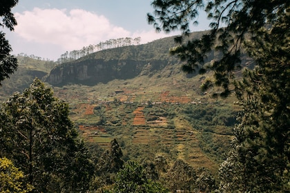 Tea plantation mountains in Sri Lanka