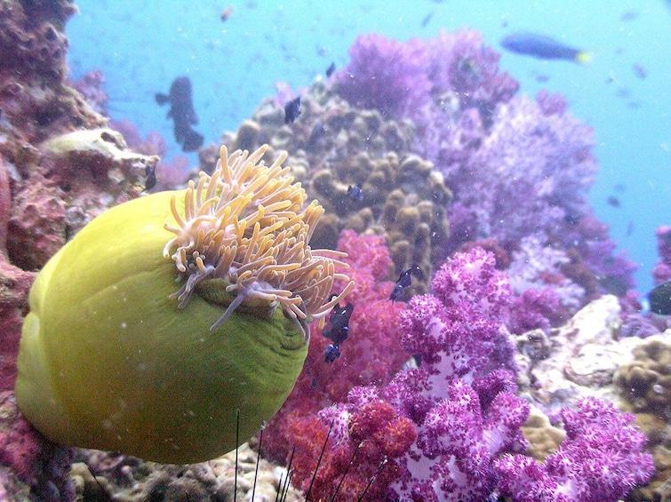 Show item 3 of 4. Phuket Discover Scuba Diving to Beautiful Racha Yai Island