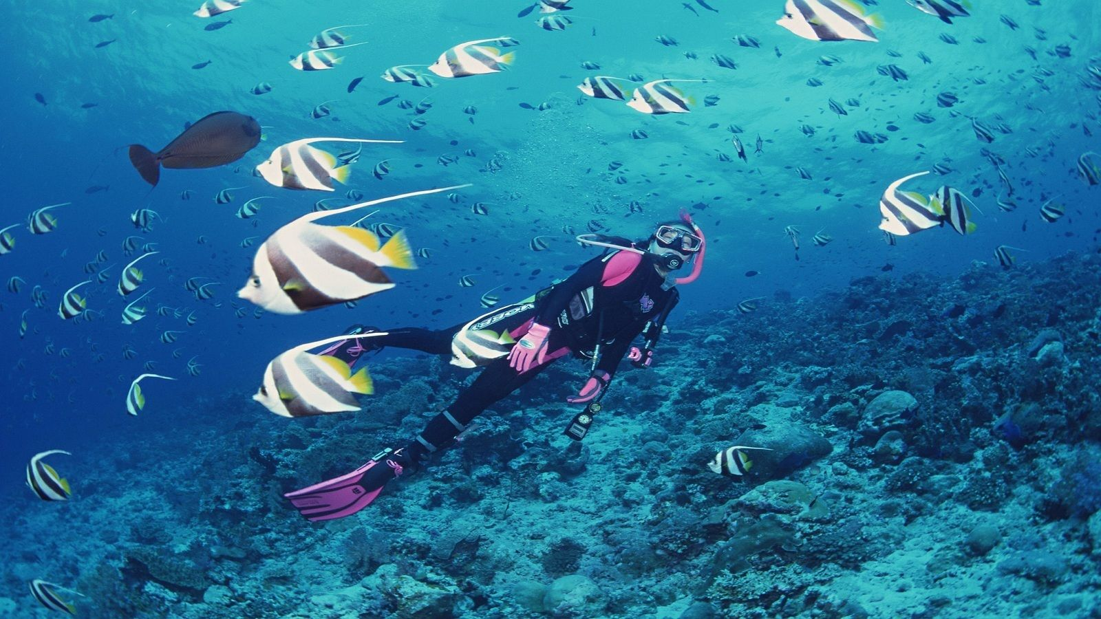 Diver surrounded by fish in Nha Trang