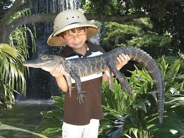 Child holds a baby crocodile at Jungle Island in Miami