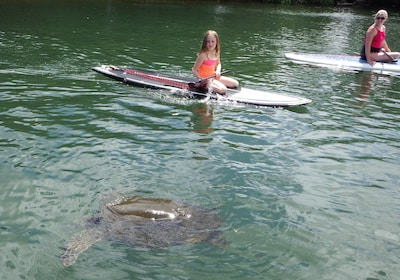 Mother and child sees a sea turtle while stand up paddle boarding in Haleiwa