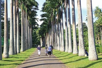 Visitors walking through the Royal Botanical Gardens, Peradeniya