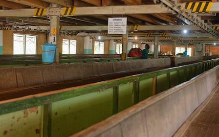 Giragama tea factory
