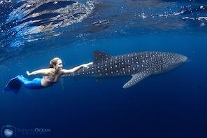 Whale Shark Snorkel Adventure