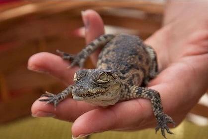 cocodrilo bebe.jpg